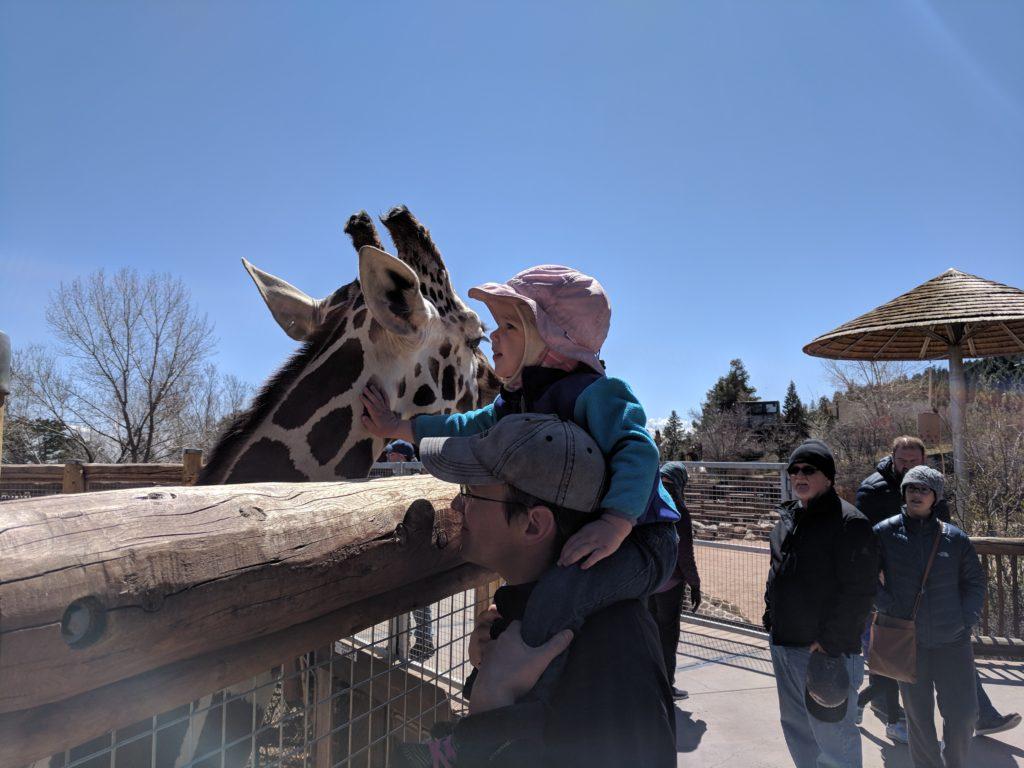 K petting a giraffe