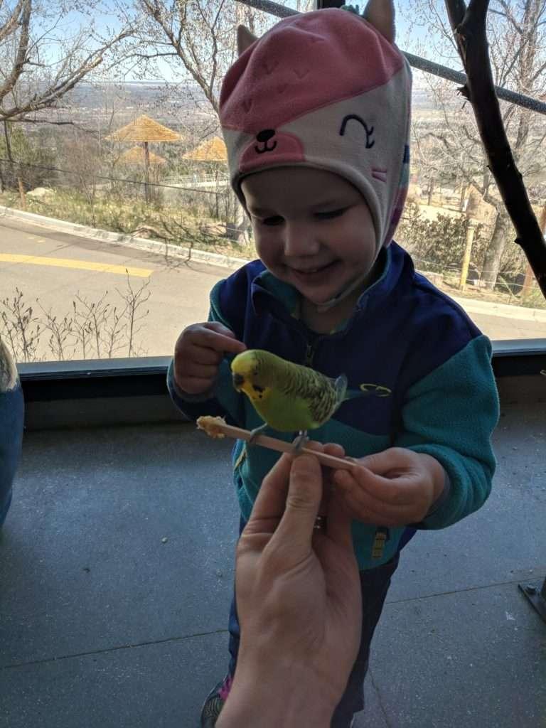 K feeding a bird