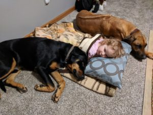 Naptime with the dogs
