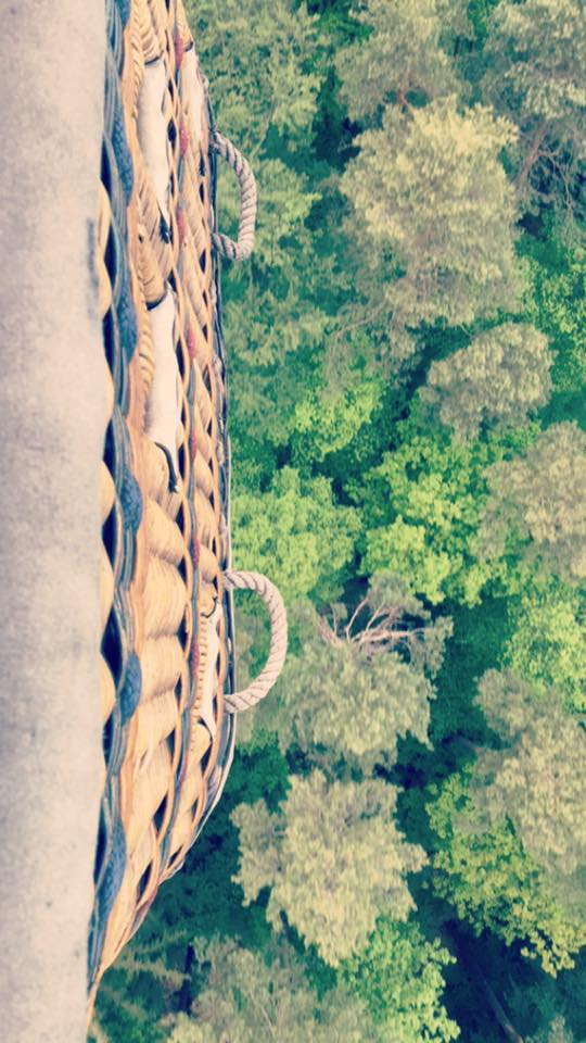 Looking down at the treetops from the hot air balloon basket