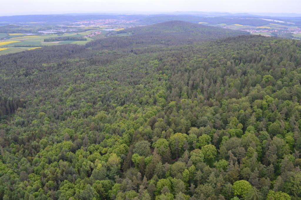 View of the tree covered hillsides from above