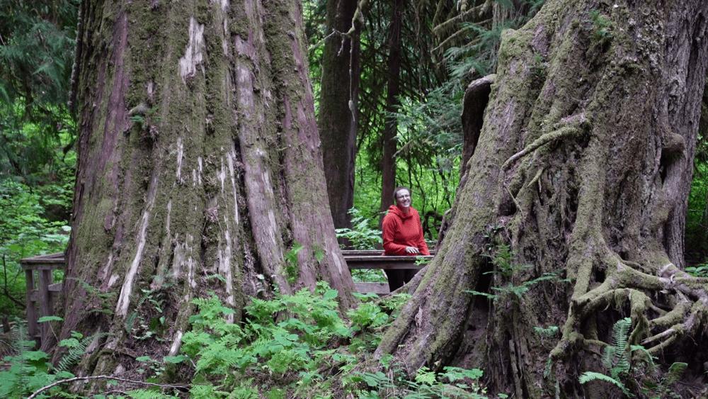 Grove of the Patriarchs Mount Rainier
